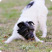 Adopt A Pet :: Nubbin - Conyers, GA