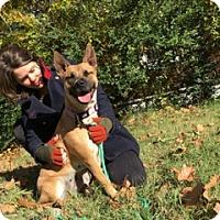 Adopt A Pet :: MADISON - Brattleboro, VT