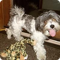 Adopt A Pet :: PENNY - Medford, WI
