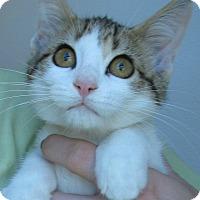 Adopt A Pet :: Mickey Dee - Menomonie, WI