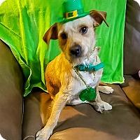 Adopt A Pet :: Trigger - Savannah, GA