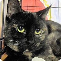 Adopt A Pet :: Maddy - Lunenburg, MA
