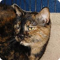 Adopt A Pet :: Baby - Winston-Salem, NC