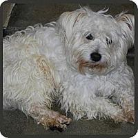 Adopt A Pet :: Luke - Seattle, WA