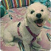 Adopt A Pet :: Breanna - La Costa, CA