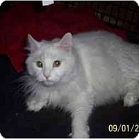 Adopt A Pet :: Blizzard - Riverside, RI