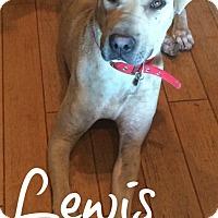Adopt A Pet :: Lewis - Scottsdale, AZ