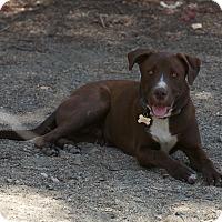 Adopt A Pet :: Kidd - Nuevo, CA