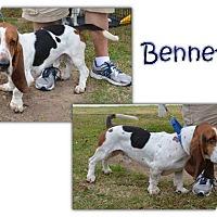 Adopt A Pet :: Bennett - Marietta, GA