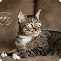 Adopt A Pet :: Boots - Staten Island, NY