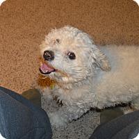 Adopt A Pet :: Twister - Peyton, CO
