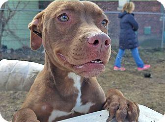 Adopt A Pet :: Sally  - Troy, MI