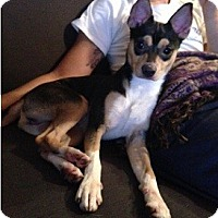 Adopt A Pet :: Jackson - Hamilton, ON