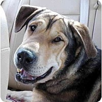Adopt A Pet :: Wilbur - Los Angeles, CA
