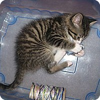 Adopt A Pet :: Dickens - Sterling Hgts, MI