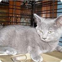 Adopt A Pet :: Alexis - Acme, PA