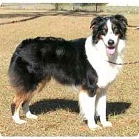 Adopt A Pet :: Kansas - Orlando, FL