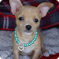 Adopt A Pet :: Allie - La Habra Heights, CA