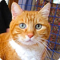 Adopt A Pet :: Simba - Davis, CA