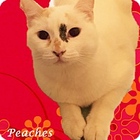 Adopt A Pet :: A Young Female: PEACHES - Monrovia, CA