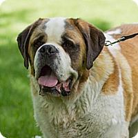 Adopt A Pet :: Wilson - Saskatoon, SK