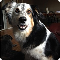 Adopt A Pet :: Lacy - Hamilton, ON