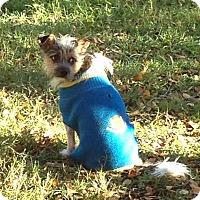 Adopt A Pet :: Hairy In Dallas - Dallas/Ft. Worth, TX