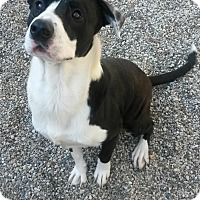 Adopt A Pet :: Merlot - Muskegon, MI