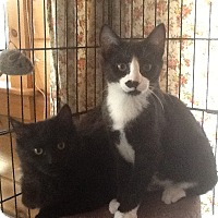 Adopt A Pet :: Mickey & Spencer - Portland, ME