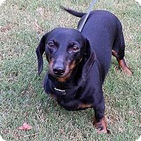 Adopt A Pet :: Charlie - Alpharetta, GA