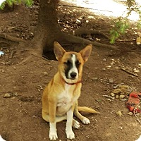 Adopt A Pet :: Sydney - Charlestown, RI