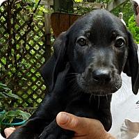 Adopt A Pet :: Nora - Charlestown, RI