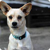 Adopt A Pet :: Margarine - Austin, TX