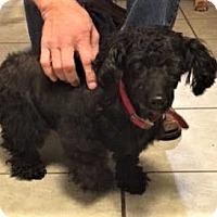 Adopt A Pet :: Bernie - Asheville, NC