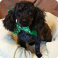 Adopt A Pet :: Cinder - Yucaipa, CA