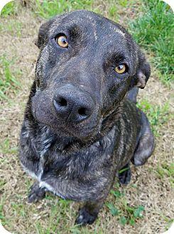 Hamilton Hound Mix Conor | Adopted Dog | ...