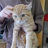 Adopt A Pet :: Boo - Lemoore, CA