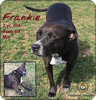 Adopt A Pet :: Frankie  - Nicholasville, KY
