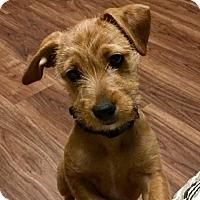 Adopt A Pet :: Adoption pending - Genny - Orangeburg, SC