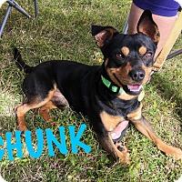 Adopt A Pet :: Chunk - Converse, TX