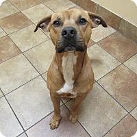 Adopt A Pet :: Hank *Petsmart GB* - Appleton, WI