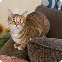 Adopt A Pet :: Willow - Morgantown, WV