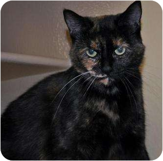 Calico Cat for adoption in Atlanta, Georgia - Crystal