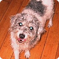 Adopt A Pet :: SIDNEY - Hollywood, FL