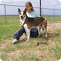 Adopt A Pet :: Buddy - Russellville, AR