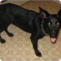 Adopt A Pet :: Seth - Chandler, IN