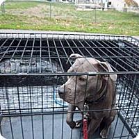 Adopt A Pet :: Jasmine - Windsor, MO
