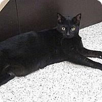 Adopt A Pet :: Jo Jo - Warminster, PA