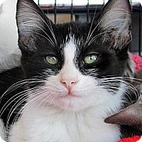 Adopt A Pet :: Demi - Seminole, FL