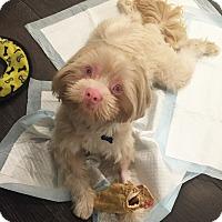 Adopt A Pet :: KOBE - West LA, CA